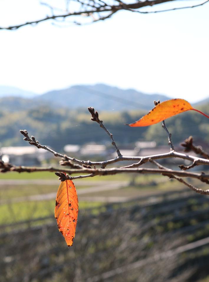 裏山散策  〜10月の終わりに〜_c0334574_13540654.jpg