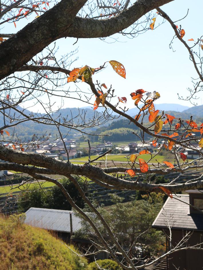 裏山散策  〜10月の終わりに〜_c0334574_13553654.jpg
