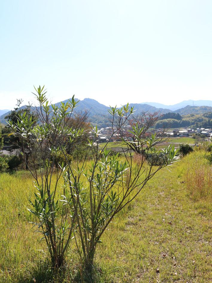 裏山散策  〜10月の終わりに〜_c0334574_13564139.jpg