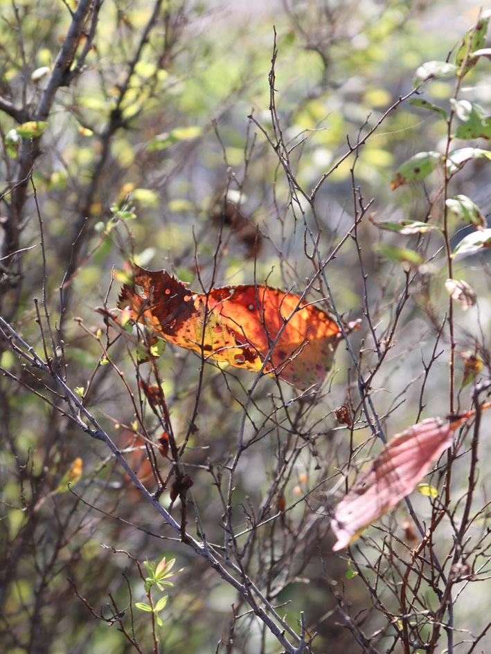 裏山散策  〜10月の終わりに〜_c0334574_14005944.jpg