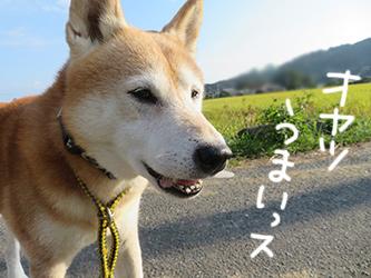 優しいいっちゃん_b0057675_11293633.jpg