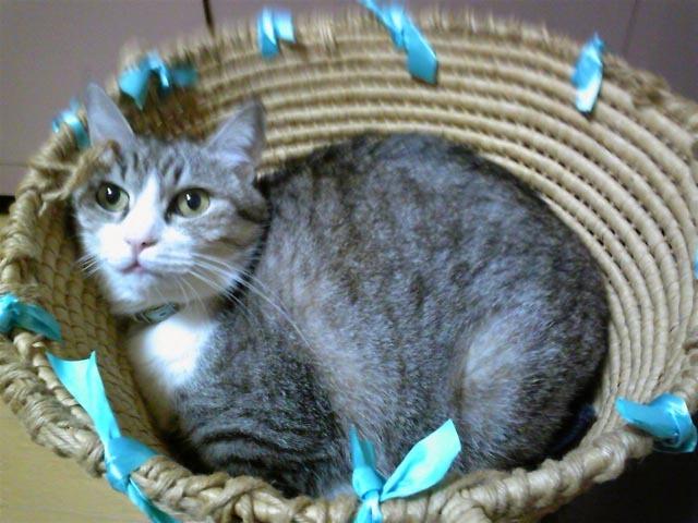 猫ちゃんの近況_c0217678_10411975.jpg