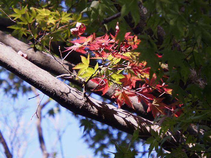 紅葉の始まり。高良山で。_a0149488_21425368.jpg