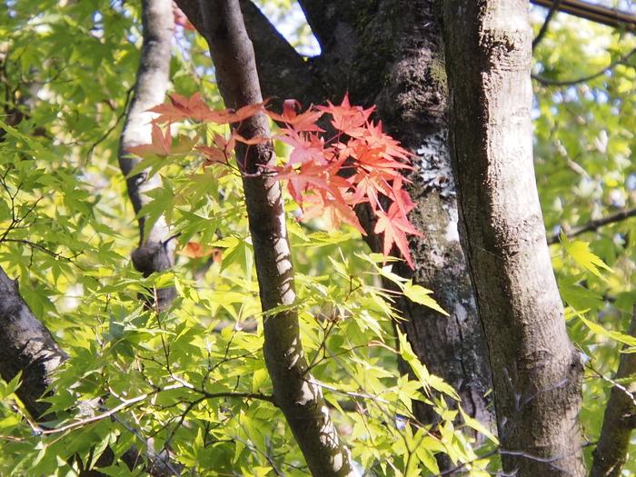 紅葉の始まり。高良山で。_a0149488_2143930.jpg