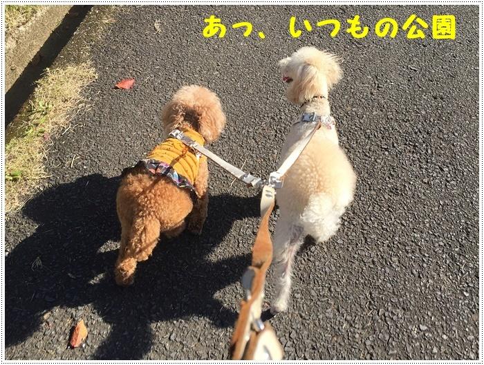 久しぶりに、さくらと大と一緒にロング散歩、この季節はどこまででも歩けそうな気がします\\(>3(O^-)/ウフ☆_b0175688_20065111.jpg