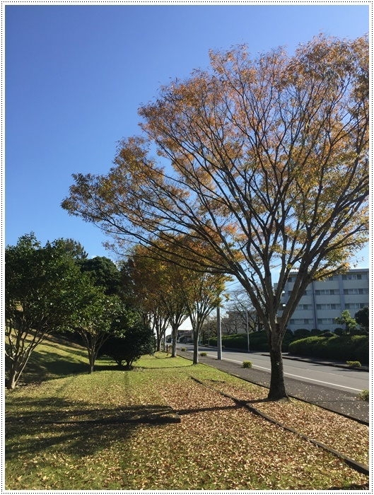 久しぶりに、さくらと大と一緒にロング散歩、この季節はどこまででも歩けそうな気がします\\(>3(O^-)/ウフ☆_b0175688_20104103.jpg