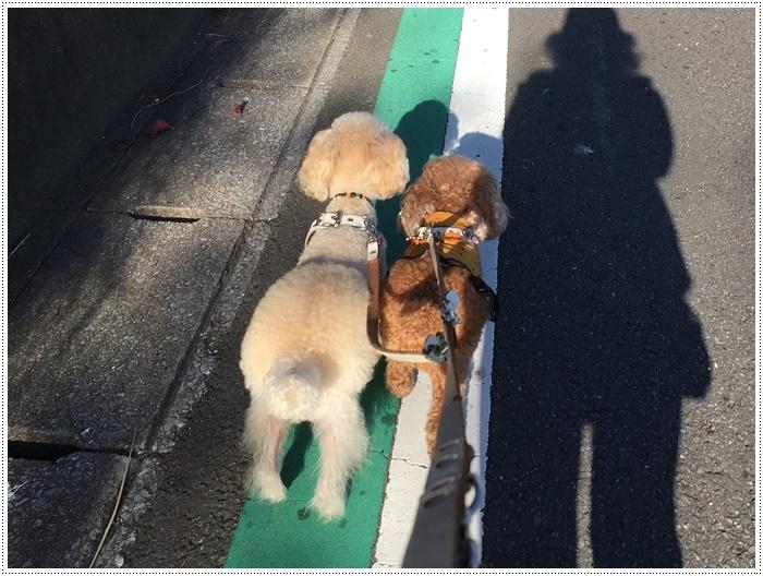 久しぶりに、さくらと大と一緒にロング散歩、この季節はどこまででも歩けそうな気がします\\(>3(O^-)/ウフ☆_b0175688_20105574.jpg