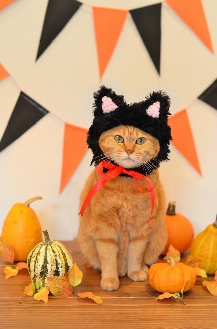 黒猫帽子でイラストとリンク♪ Happy Halloween!_d0025294_18095909.jpg