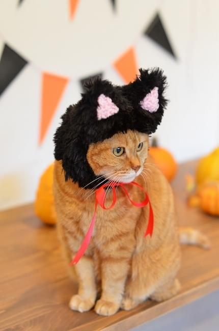 黒猫帽子でイラストとリンク♪ Happy Halloween!_d0025294_18124227.jpg
