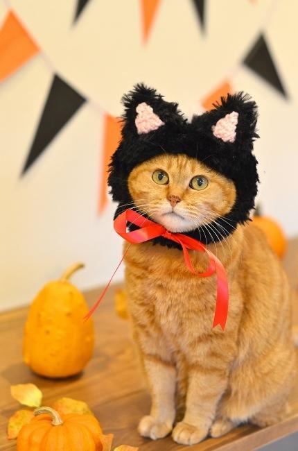 黒猫帽子でイラストとリンク♪ Happy Halloween!_d0025294_18130127.jpg