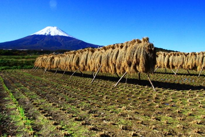 令和元年10月の富士(25)農村公園初冠雪の富士_e0344396_21035942.jpg