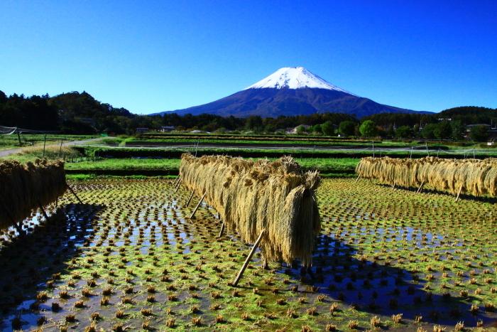 令和元年10月の富士(25)農村公園初冠雪の富士_e0344396_21040711.jpg
