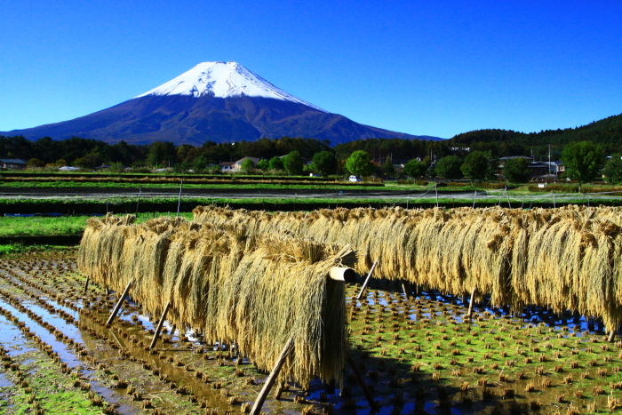 令和元年10月の富士(25)農村公園初冠雪の富士_e0344396_21041219.jpg