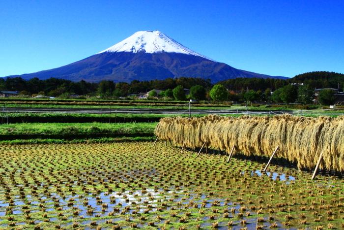 令和元年10月の富士(25)農村公園初冠雪の富士_e0344396_21042110.jpg