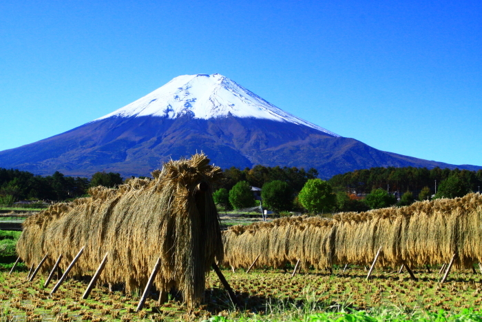 令和元年10月の富士(25)農村公園初冠雪の富士_e0344396_21042931.jpg