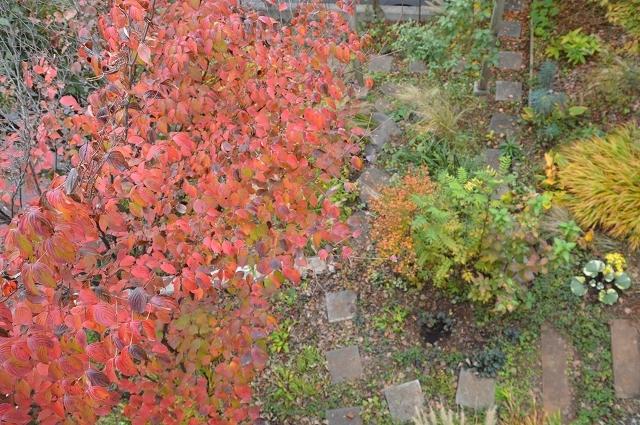 イベントのお知らせ : 緑でつながる庭づくり 秋編_c0124100_18445876.jpg