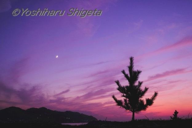 〜 Pine tree 〜_c0152400_07461131.jpg