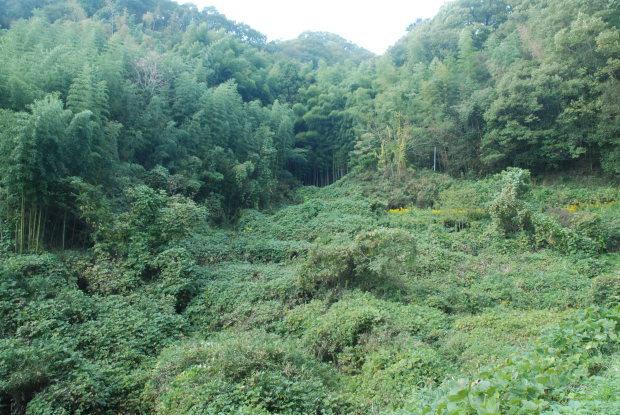 空振りの岡山県製薬のハケ近く。と、感謝の業務連絡_d0359503_16401021.jpg