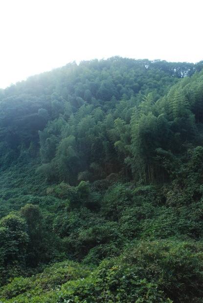 空振りの岡山県製薬のハケ近く。と、感謝の業務連絡_d0359503_16401422.jpg
