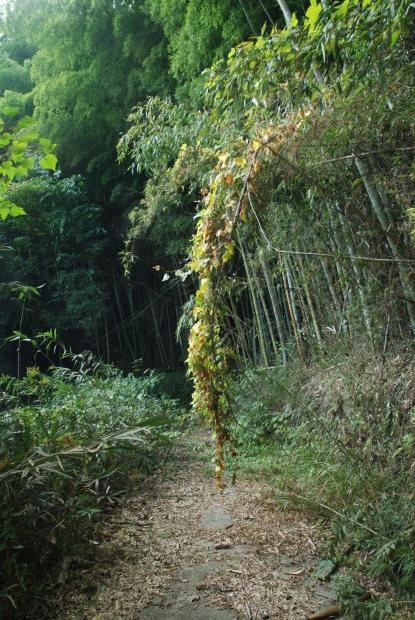 空振りの岡山県製薬のハケ近く。と、感謝の業務連絡_d0359503_16401722.jpg