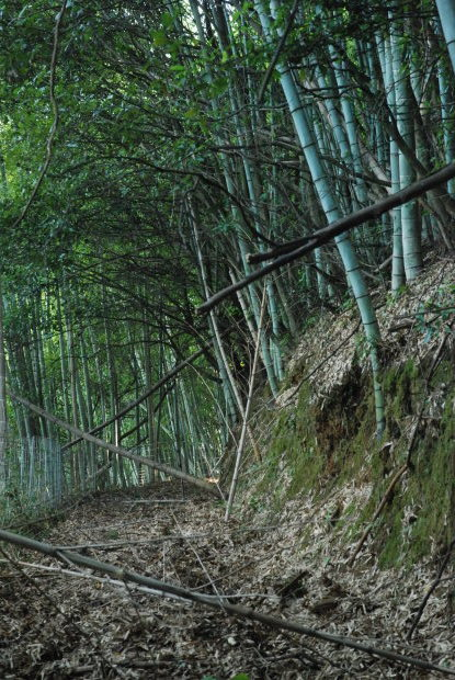 空振りの岡山県製薬のハケ近く。と、感謝の業務連絡_d0359503_16402335.jpg