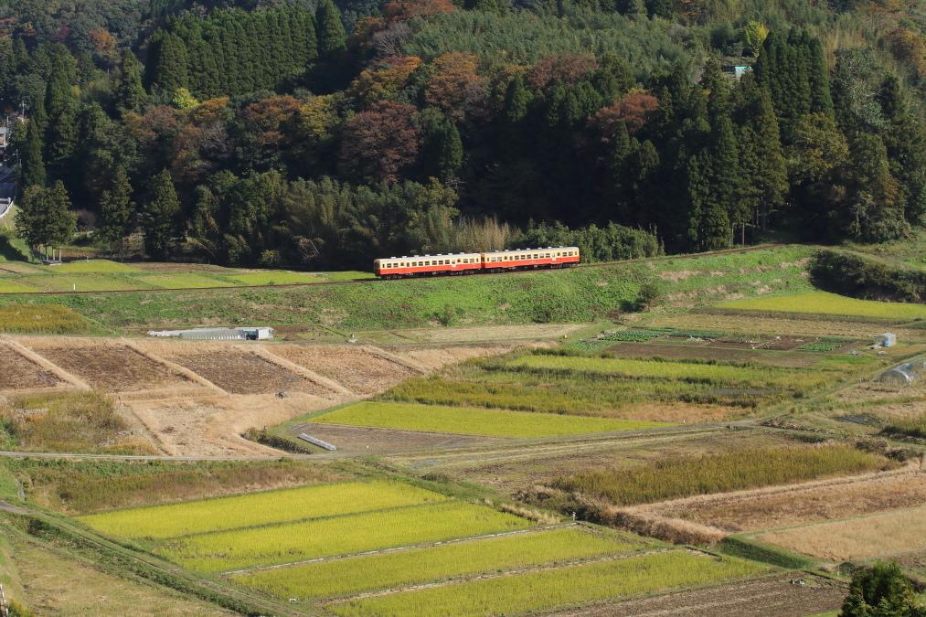 晩秋の新緑 - 2016年・小湊鉄道 -_b0190710_20563023.jpg