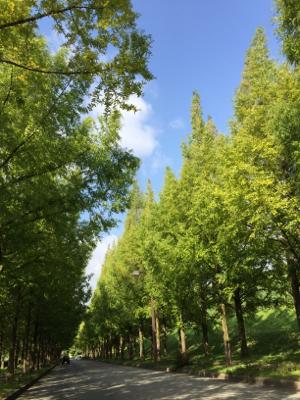 束の間楽しんだ青空と自然の美しさ_b0151911_22053058.jpg