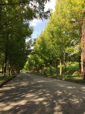 束の間楽しんだ青空と自然の美しさ_b0151911_22081438.jpg
