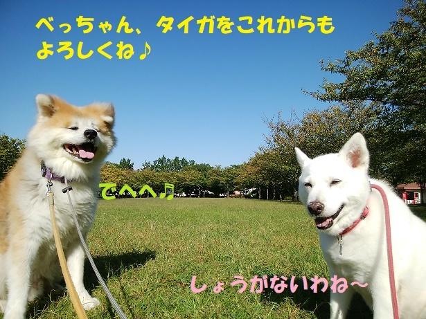 f0121712_14480757.jpg
