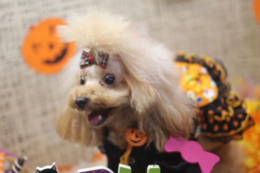 10月27日ご来店のワンちゃんです!!_b0130018_09004164.jpg