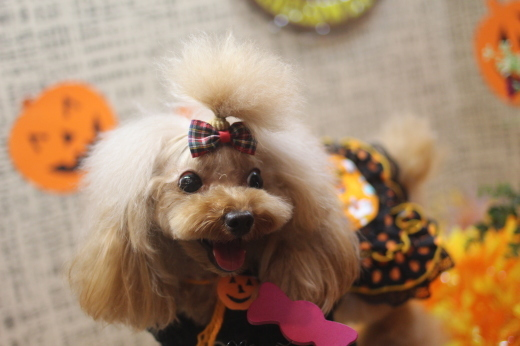 10月27日ご来店のワンちゃんです!!_b0130018_09005031.jpg
