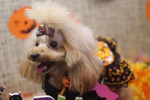 10月27日ご来店のワンちゃんです!!_b0130018_09005809.jpg