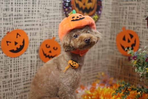 10月27日ご来店のワンちゃんです!!_b0130018_09135888.jpg