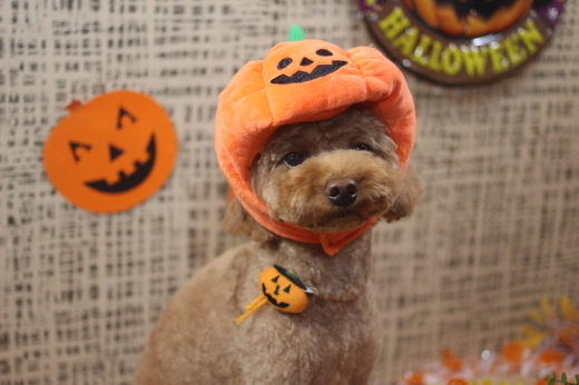 10月27日ご来店のワンちゃんです!!_b0130018_09140243.jpg