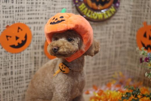 10月27日ご来店のワンちゃんです!!_b0130018_09140415.jpg