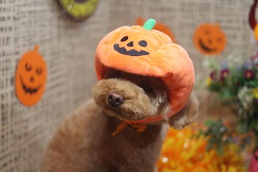 10月27日ご来店のワンちゃんです!!_b0130018_09140905.jpg