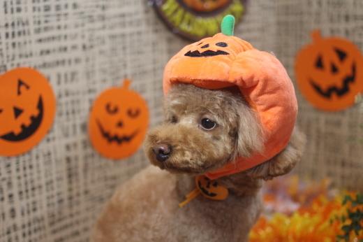 10月27日ご来店のワンちゃんです!!_b0130018_09141565.jpg