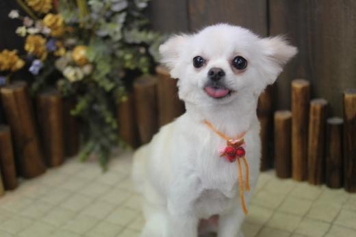 10月27日ご来店のワンちゃんです!!_b0130018_09152158.jpg