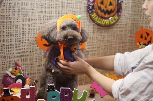 10月27日ご来店のワンちゃんです!!_b0130018_09162527.jpg