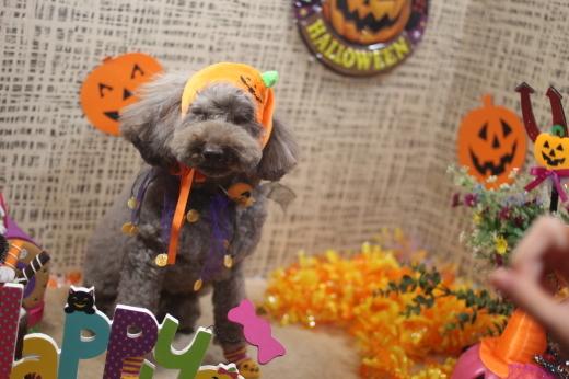 10月27日ご来店のワンちゃんです!!_b0130018_09163641.jpg