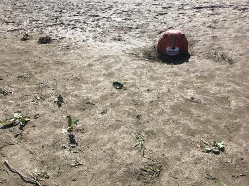 【号外】獅子太郎イリュージョン 多摩川氾濫 泥脱出_f0203027_11485295.jpg