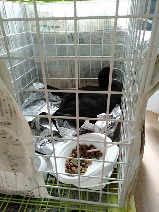 金沢自然動物園の動物病院へ_c0162128_07574825.jpg