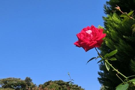 少しづつ 新しい季節のにおい_a0259130_17234111.jpg