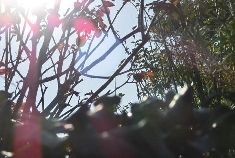 少しづつ 新しい季節のにおい_a0259130_17240735.jpg