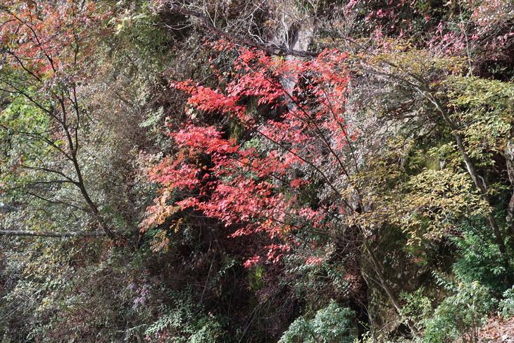 傾山山旅(冷水コース)_e0272335_449338.jpg