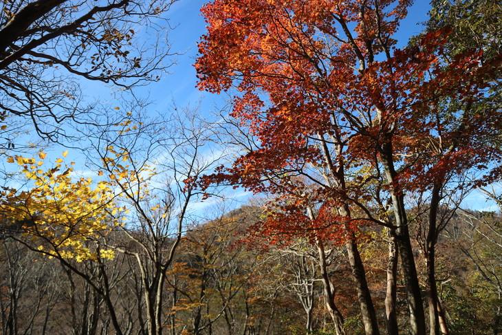 傾山山旅(冷水コース)_e0272335_533670.jpg