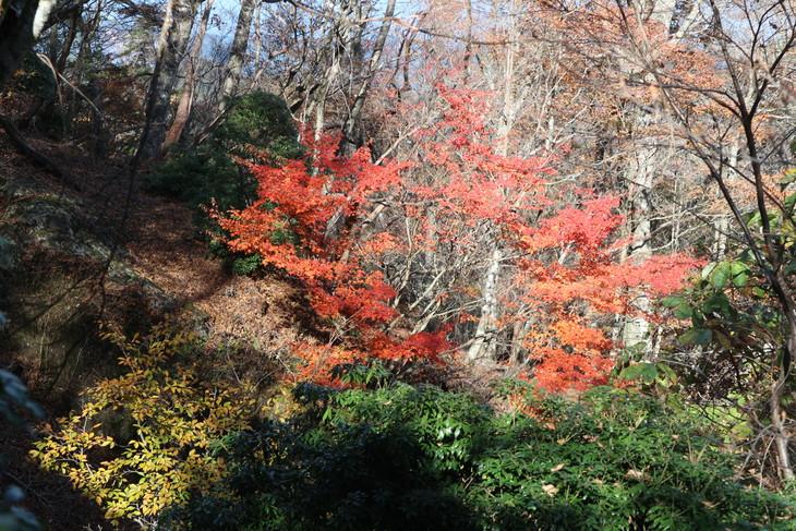傾山山旅(冷水コース)_e0272335_583888.jpg