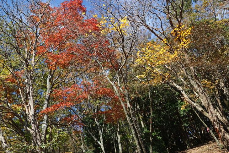 傾山山旅(冷水コース)_e0272335_750396.jpg