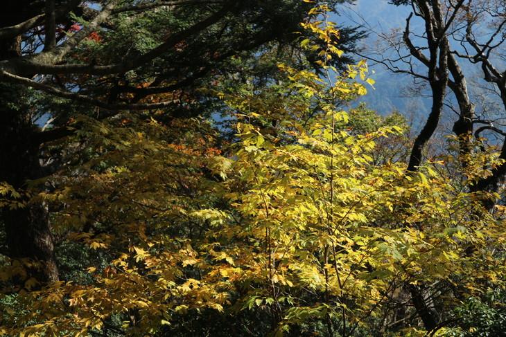 傾山山旅(冷水コース)_e0272335_7513771.jpg