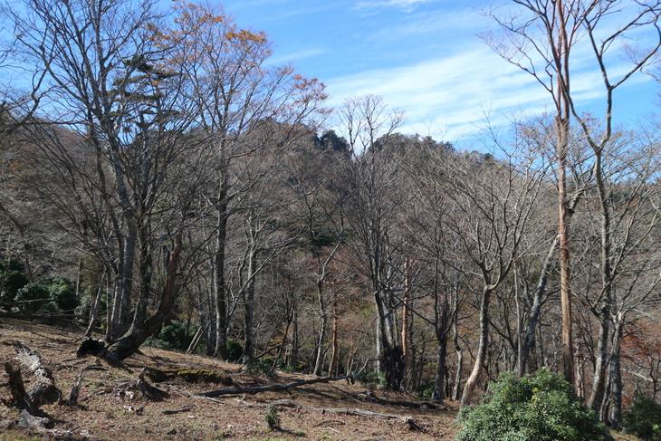 傾山山旅(冷水コース)_e0272335_7585933.jpg